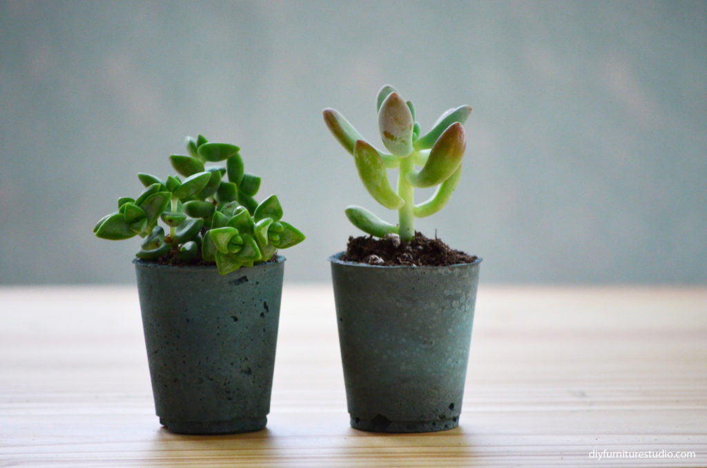 Teal diy succulent planters made with Behr interior paint, Quikcrete anchoring cement, and water
