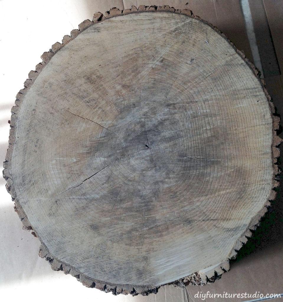Tree Slice Stump, Ash